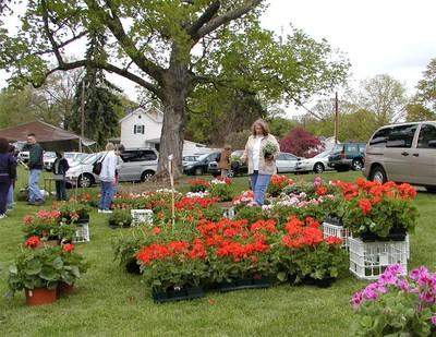 Geraniums, herbs, hanging baskets, and more!