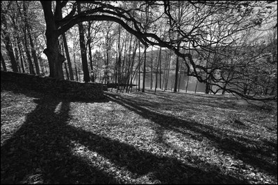 Shadows and Shapes of Autumn in Black and White by Mel Kleiman.