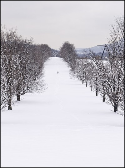 Winter Walk.  Photo by Mel Kleiman.