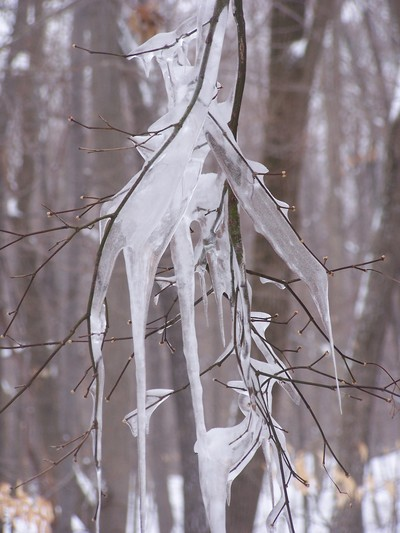 Ice on the tree branches.  Photo by Kathi Ellick.