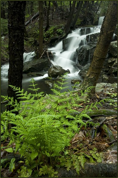 Fern and Falls.  Photo by Tom Doyle.