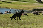 Photo by Maureen Moore. Shadow Dogs at Ring's Pond